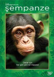Şempanze - Chimanzee