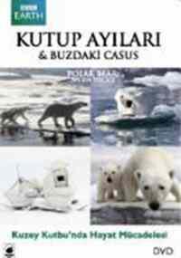 Kutup Ayıları Buzdaki Casus