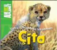 Vahşi Doğadaki Yaşamım-Çita
