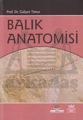 Balık Anatomisi