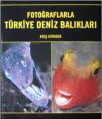 Fotoğraflarla Türkiye Deniz Balıkları