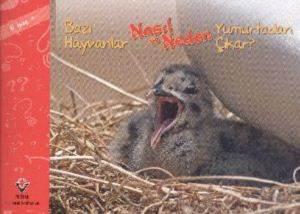 Bazı Hayvanlar Nasıl ve Neden Yumurtadan Çıkar 6 Yaş