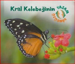 Kral Kelebeğinin Yaşam Döngüsü