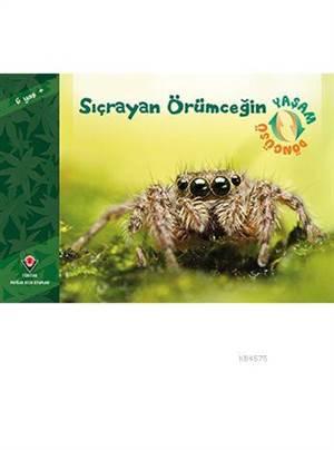 Sıçrayan Örümceğin Yaşam Döngüsü