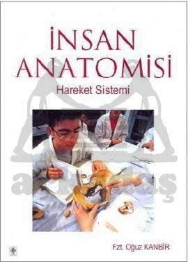 İnsan Anatomisi-Ekin