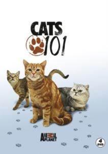 Kediler-Cats 101 (4 DVD)