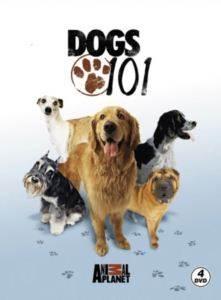 Köpekler-Dogs 101 (4 DVD)