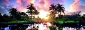 Palm Trees, Editio ...