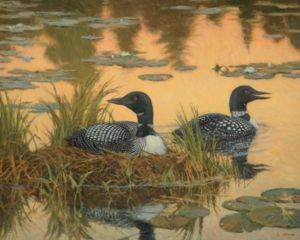 White Mountain <br/>Nesting Loons ...