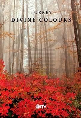 Turkey Divine Colo ...