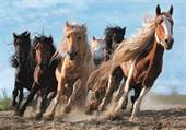 Galloping Horses / ...