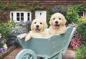 Bahçıvan Köpekler